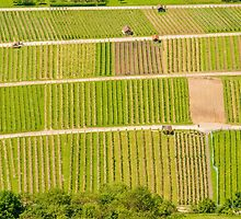 German Vineyards by Mark Bangert