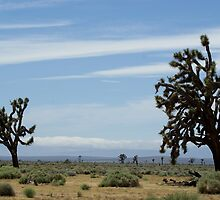 Joshua Tree by Claudia Harrison