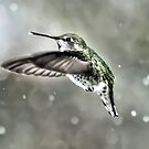 Snowflake Hummer by Kenneth Haley