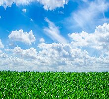 Green grass and blue sky by TilenHrovatic