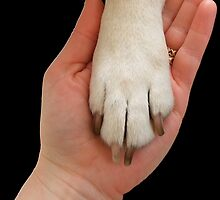 Dog Paw In Hand by amanda metalcat
