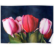 Sennelier Tulips Poster