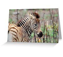 NEW TO THE WORLD - BABY ZEBRA -  BURCHELL'S ZEBRA – Equus burchelli – Bontkwagga Greeting Card