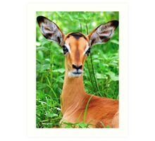 IMPALA BABY, EYES AND EARS! - BLACK-FACED IMPALA _Aepyceros melampus petersi Art Print