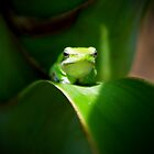Lime Light Frog by Penny Kittel