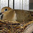 My Dove by WildestArt