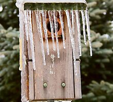 Icicle Birdhouse by Kenneth Keifer