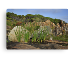 Hide and seek, Betty's Bay Canvas Print
