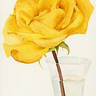 Glass Vase and Rio Samba Rose by Ken Powers