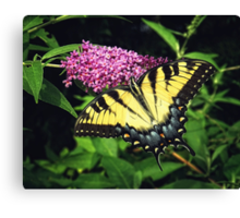 On Golden Wings Canvas Print