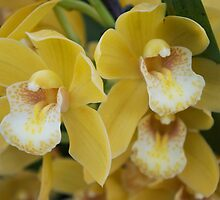 Tropical Orchid 6 by GiulioCatena