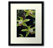 Tropical Orchid 5 Framed Print