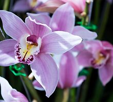 Tropical Orchid 4 by GiulioCatena