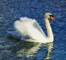 Swan Swimmer by ozziemozzie