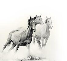 horses herd by marusya1