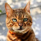 BAMBOO the lovely Bengal Cat #2 by Gilberte