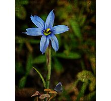 Wildflower Smiles Photographic Print