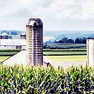 Amish Grain Silos  by Polly Peacock