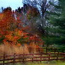 Fall Corner by Sheryl Gerhard