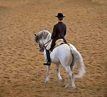 Lipizzaner Stallion by phil decocco