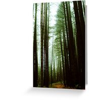 Sugar Pine Walk Greeting Card