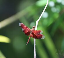 Red Dragonfly by ramirezj017