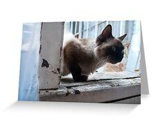 BLUE EYED CAT Greeting Card