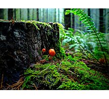 Small But Tough ~ Wild Mushrooms ~ Photographic Print