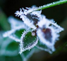 Morning Frost by Fiona Huddleston