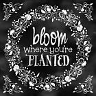 Bloom Where You're Planted Chalkboard Poster by Rockinchalk