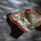 Leaf on Water 10 by ChuckBuckner