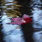 Leaf on Water 14 by ChuckBuckner