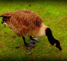 Duck down... by shelleybabe2