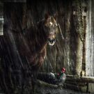 Shelter from the Storm by Lea  Weikert