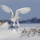 Take-off by Todd Weeks