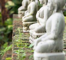 buddhas by Anne Scantlebury