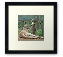 Do I Have A Pouch Mum? Framed Print