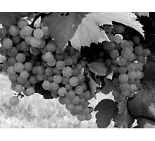 Grapevine - Full  ^ Photographic Print