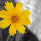 Yellow Flower by WeeZie
