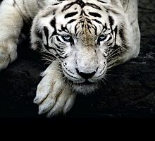 White Tiger Case by ekproductions