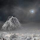 Blue Sky by Igor Zenin