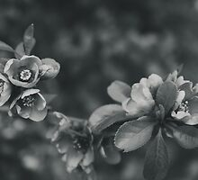 Flowers by Matzeline