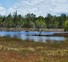 Brunswick Heads Wetlands by Wadla