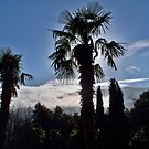 Palms Mountains Clouds  by Rick  Todaro