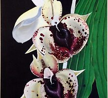 Burgandy Chips Orchid by Melanie Froud
