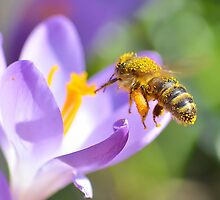 Bees Make Honey by relayer51