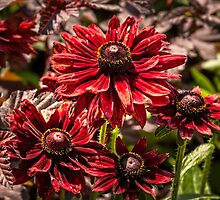 Cherry Brandy by PhotosByHealy