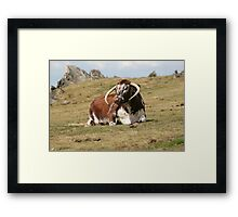 english longhorn Framed Print