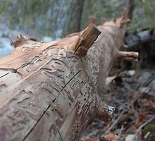 Naturally Artsy Fallen Tree by JeffraWPhotos
