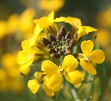 wallflowers by markspics